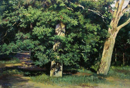Деревья. Козловка-Засека.