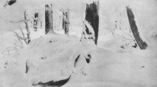 Лес под снегом.