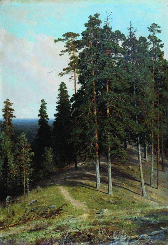 Лес с горы.