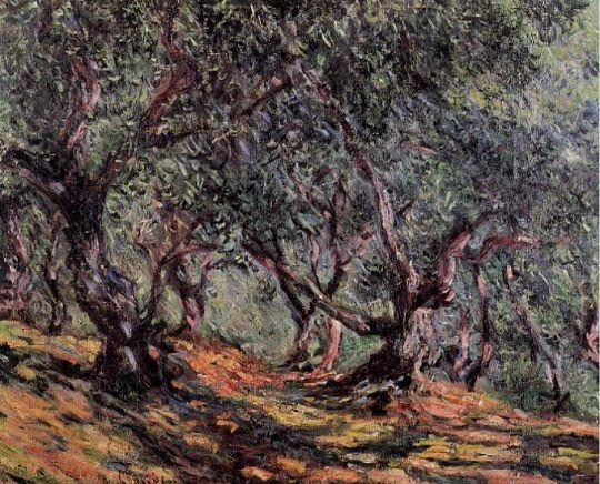 Оливковые деревья в Бордигере