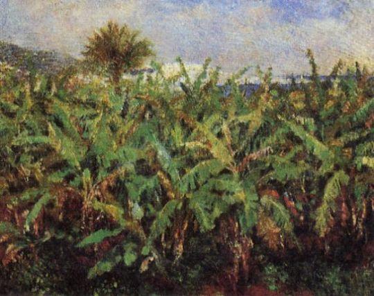 Поле банановых деревьев