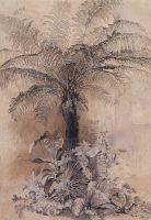 Тропические растения. Древовидный папоротник