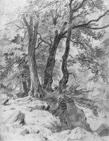 В лесу графини Мордвиновой. Петергоф.