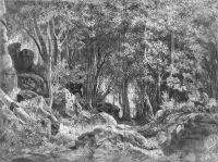 Валаам. Лес на камнях.
