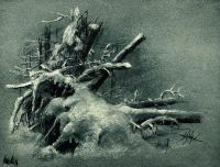 Выкорчеванные пни под снегом.