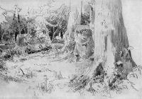 Вырубленный лес.