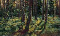 Папоротники в лесу.