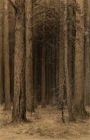 Паутина в лесу.