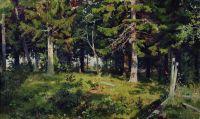 Поляна в лесу.