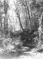 Ручей в лесу2.