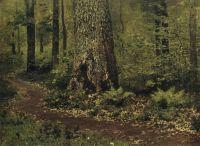 Тропинка в лиственном лесу. Папоротники. Около