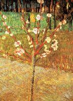 Миндаль в цвету