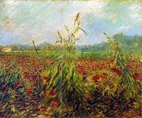 Зеленые колосья пшеницы