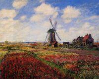 Поле с тюльпанами в Голландии