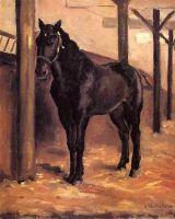 Йеррес, темный залив, лошадь в конюшне