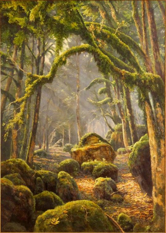 Туман в самшитовом лесу