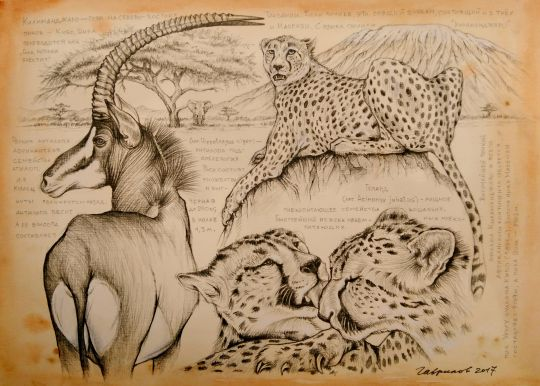 Килиманджаро. Гепарды и антилопа