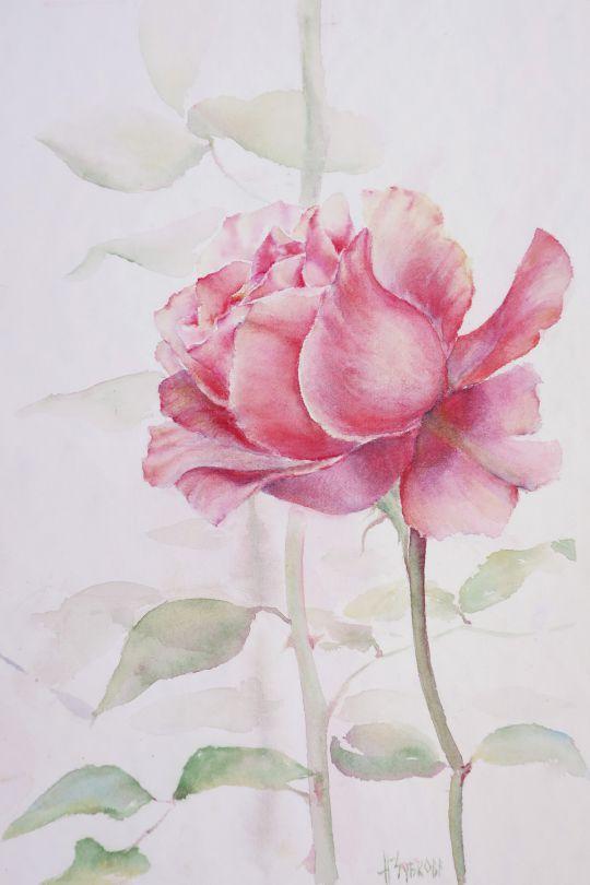 Роза в тумане