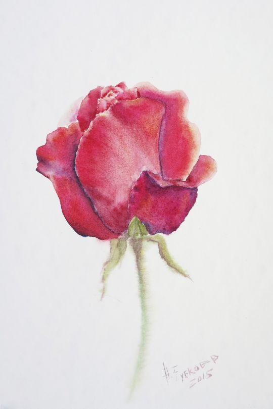 Роза Муладхара