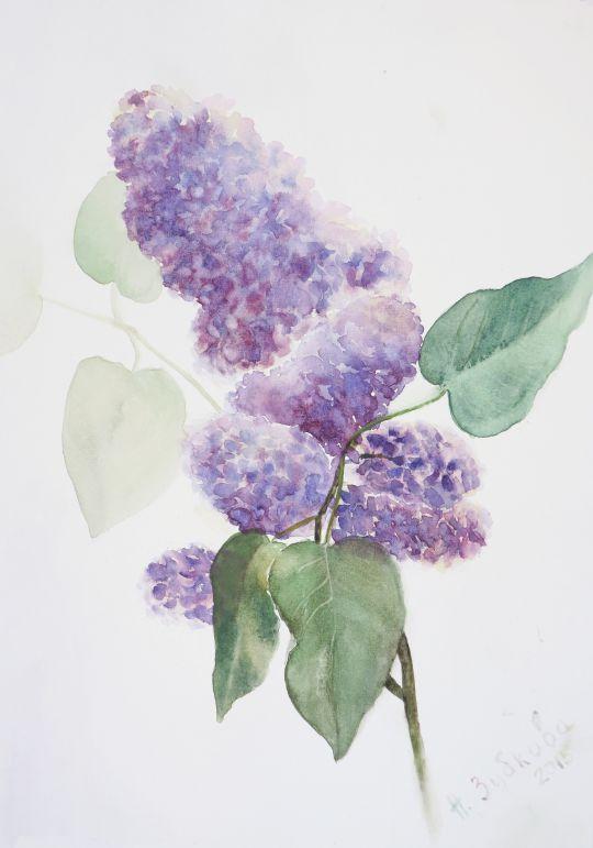 Картина акварелью Сирень цветет