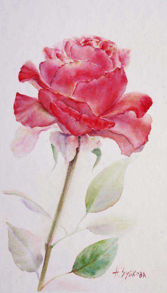 Картина акварелью Роза