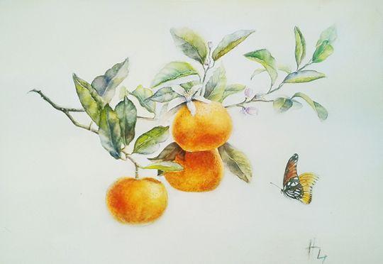 Мандарины и бабочка