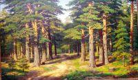 Дорожка в сосновом лесу