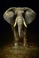 Слон и мышка.худ.С.Минаев