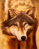 Волк.худ.А.Бруно