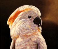 Попугай.худ.Т.Бруно