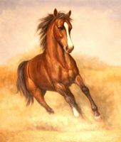 Конь. худ.Т.Бруно