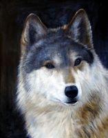 Волк.худ.А,Бруно