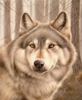 Волк.худ.С.Минаев