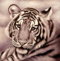 Тигр.худ.А.Бруно