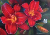Роса на красной лилии