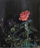 Ночной сад. Опатийская роза.