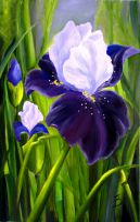 Цветы Ириды
