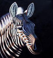 Зебра в солнечном свете