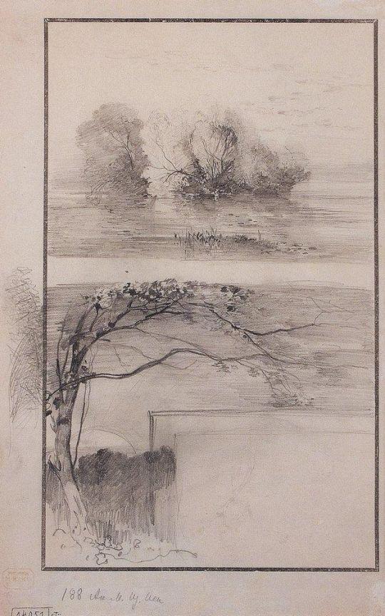 Деревья у воды. Ветви деревьев