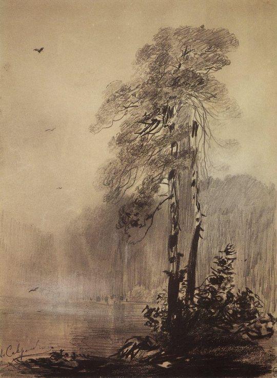 Сосны на берегу озера