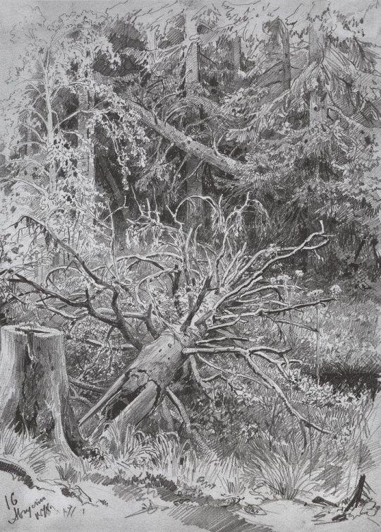 В лесу. Из леса с грибами.