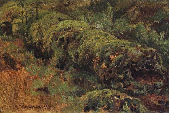 Гнилое дерево, покрытое мхом.