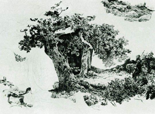 Группа лиственный деревьев и камни