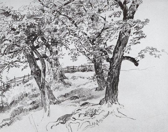 Деревья у ручья на горе Кастель.
