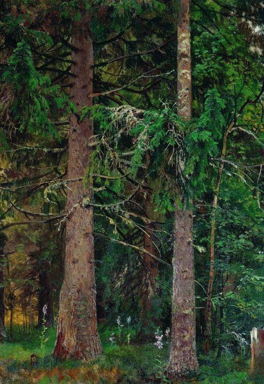 Еловый лес зимой.