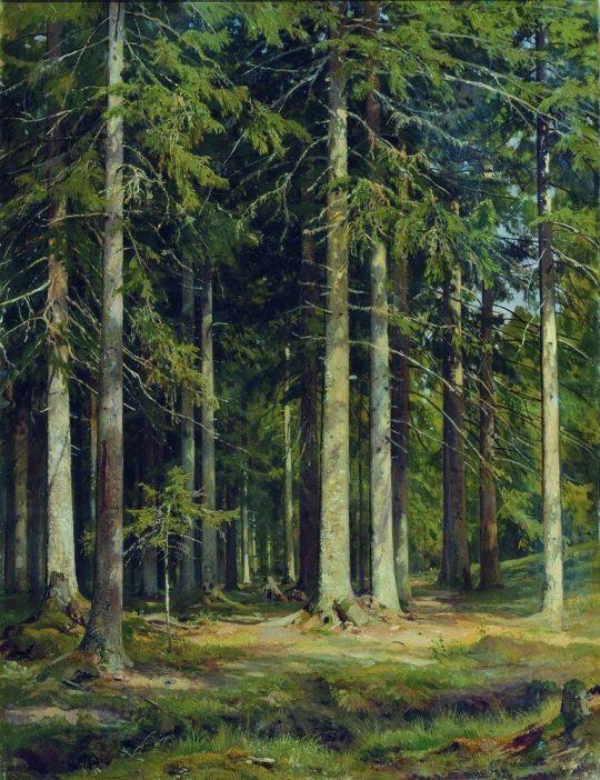 Еловый лес.