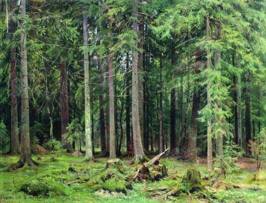 Лес в Мордвинове.