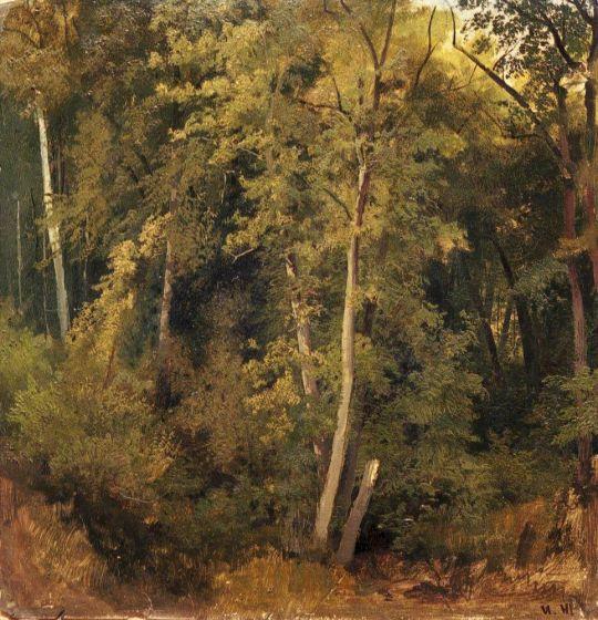 Лесной пейзаж2