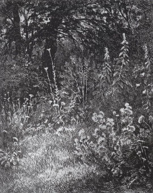 Лес-осинник.