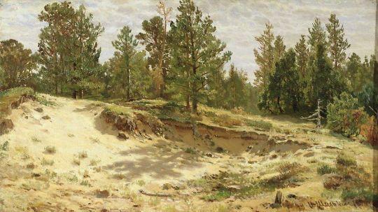 Молодые сосенки у песчаного обрыва. Мериови по Финляндской железной дороге.